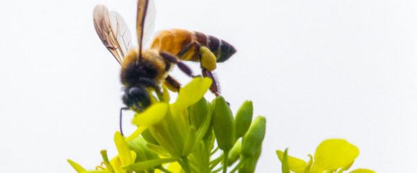 Android Studio Bumblebeeの新規プロジェクトにKotlin版のRealmを追加する